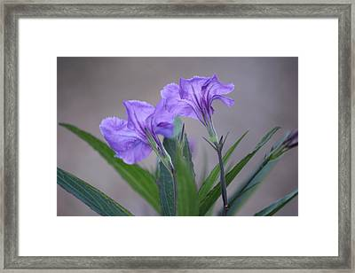 Framed Print featuring the photograph Double The Pleasure by Penny Meyers