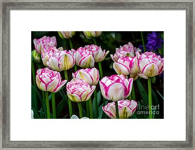 Double Touch - By Sabine Edrissi Framed Print by Sabine Edrissi
