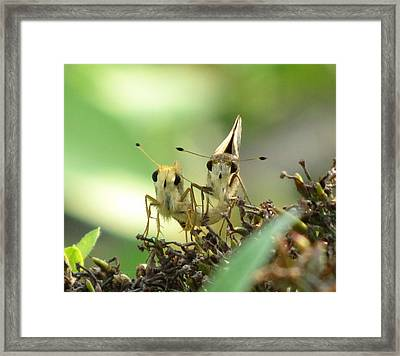 Framed Print featuring the photograph Double Trouble by Jennifer Wheatley Wolf