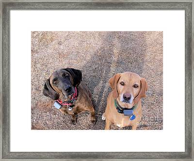 Double Trouble Framed Print by Kathy Kavanagh