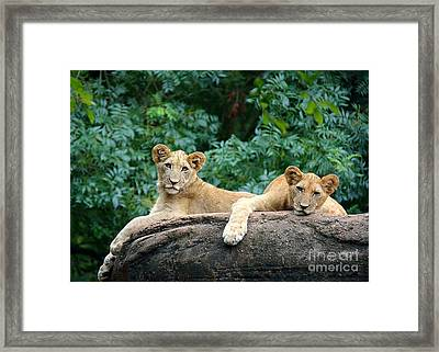 Double Trouble Framed Print by Lisa L Silva