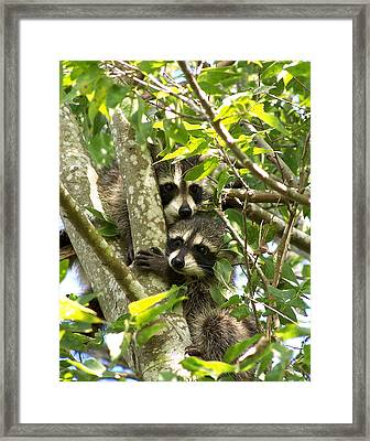 Double Trouble Framed Print by Peg Urban