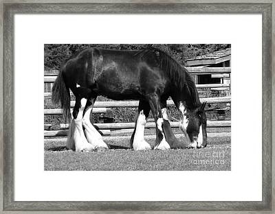 Framed Print featuring the photograph Double Vision by Ann E Robson