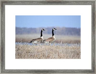 Double Vision Framed Print