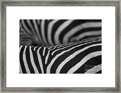 Double Vision... Framed Print