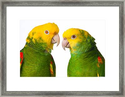 Double Yellow-headed Amazon Pair Portrait Framed Print