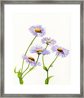 Douglas Aster Wild Flower Framed Print by Sharon Freeman