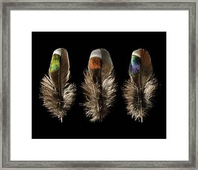 Dove Framed Print by Chris Maynard
