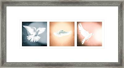 Dove In Flight Triptych Framed Print