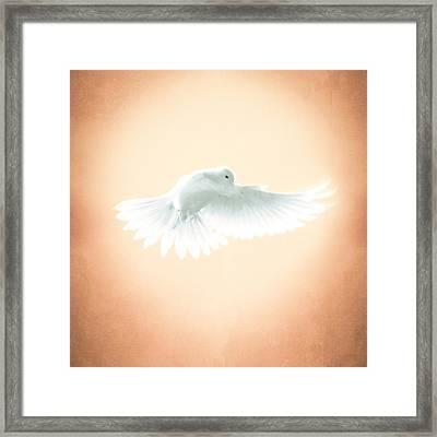 Dove In Flight Yellow Framed Print