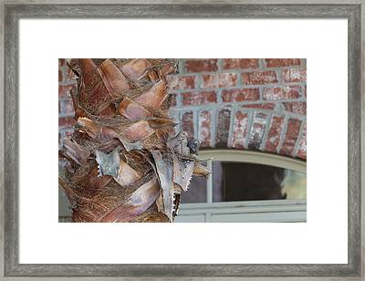 Dove Nest 2 Framed Print