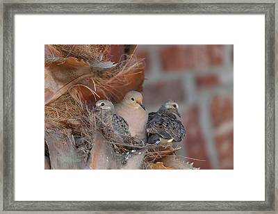 Dove Nest 4 Framed Print