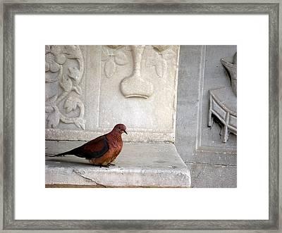 Dove On Historic Art Framed Print
