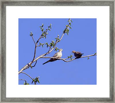 Framed Print featuring the photograph Doves by David Lester