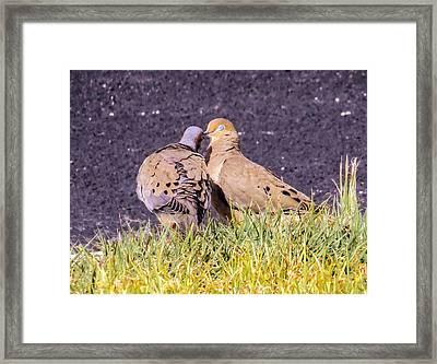 Doves Kisses Framed Print by Zina Stromberg