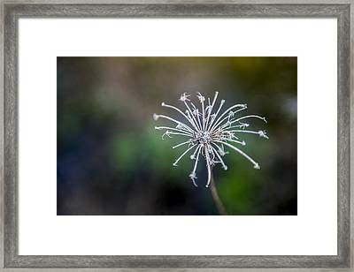 Down At The Pond 2 Framed Print by Courtney Wilson