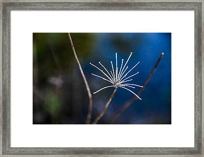 Down At The Pond 3 Framed Print by Courtney Wilson