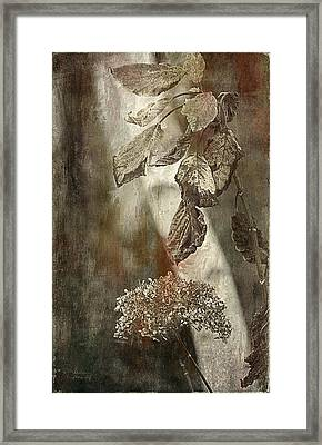 Down For Winter Framed Print by Julie Palencia