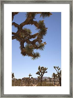 Down In Front Framed Print by Amanda Barcon