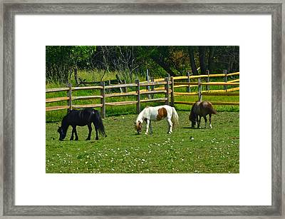 Down On The Ranch Framed Print