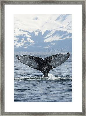 Down Framed Print