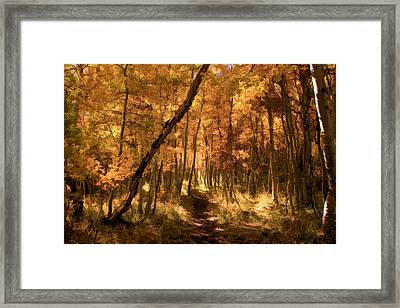 Framed Print featuring the photograph Down The Golden Path by Donna Kennedy