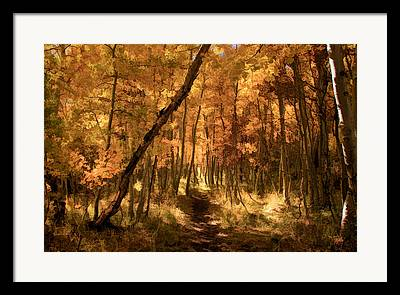 Aspen Grove Framed Prints