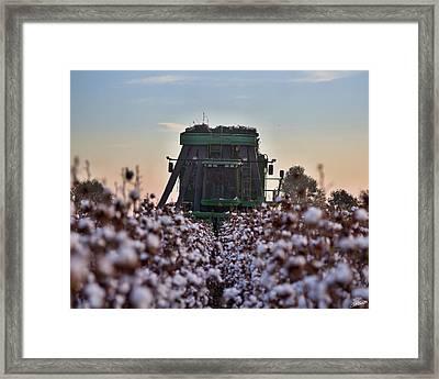 Down The Row Framed Print