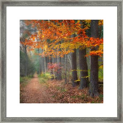 Down The Trail Square Framed Print by Bill Wakeley