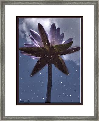 Down Under  Lotus Framed Print by Debra     Vatalaro