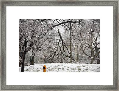 Downed Trees And Wire Framed Print by Charline Xia