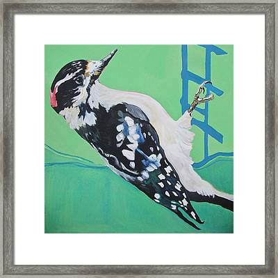 Downey Woodpecker Framed Print