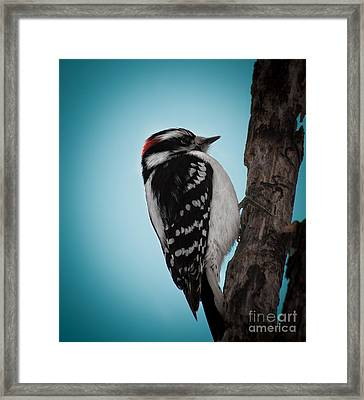 Downy Framed Print