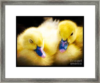 Downy Ducklings Framed Print by Edward Fielding