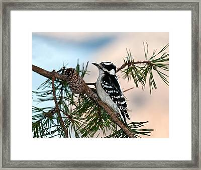Downy In The Pines Framed Print by Lara Ellis