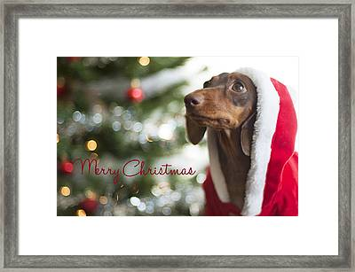 Doxie Clause Framed Print by Rischa Heape
