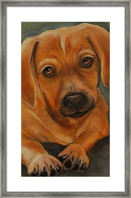 Doxie Framed Print by Jean Cormier