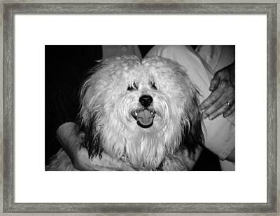 Dr. Watson Framed Print by Cathy Donohoue