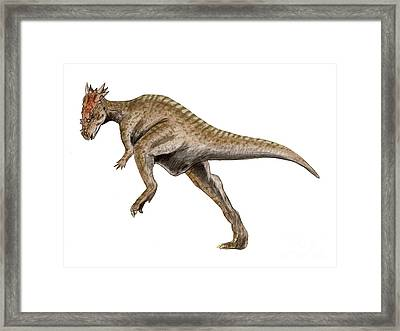 Dracorex Dinosaur Framed Print by Nobumichi Tamura