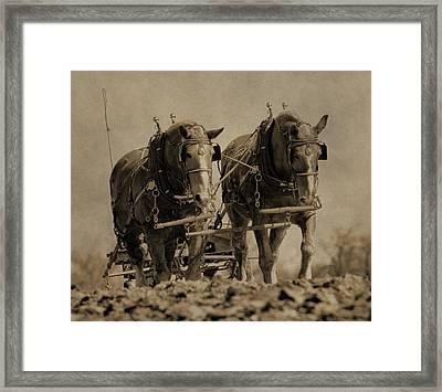 Draft Horses Framed Print by Dan Sproul