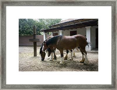 Framed Print featuring the photograph Draft Horses by Lynn Palmer