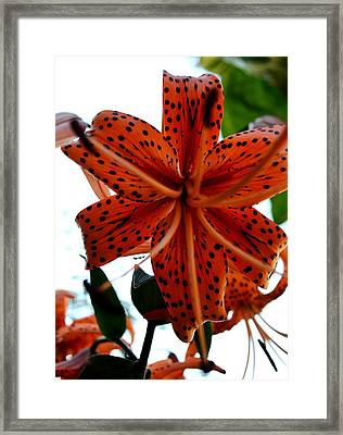 Dragon Flower Framed Print