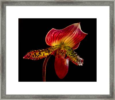 Dragon Flower Framed Print by Jean Noren