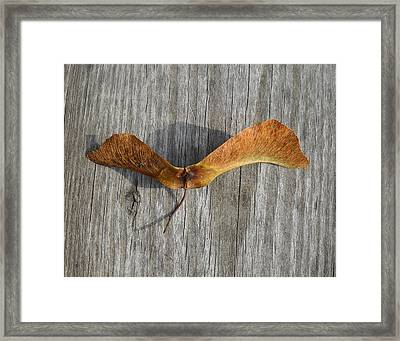 Dragon Fly Framed Print by  George Griffiths