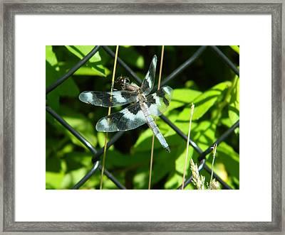 Dragon Fly IIi Framed Print