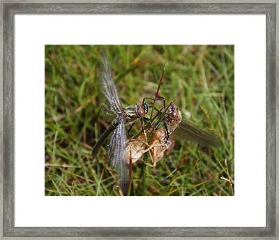 Dragon Fly Insect War Framed Print by Lisa Anne McKee