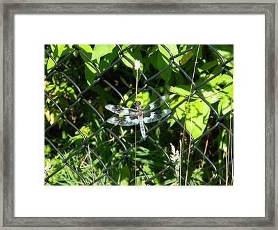 Dragon Fly Iv Framed Print