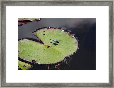 Dragon Fly On A Lily Pad Framed Print by Charlie Day