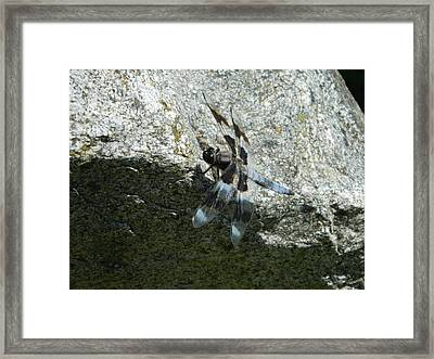 Dragon Fly On The Rock Framed Print