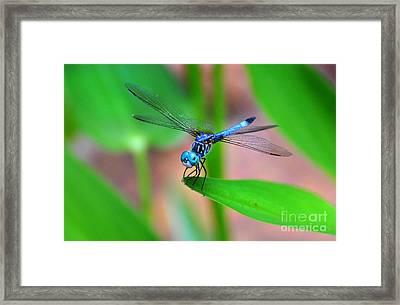 Dragon Fly Framed Print by Stuart Mcdaniel